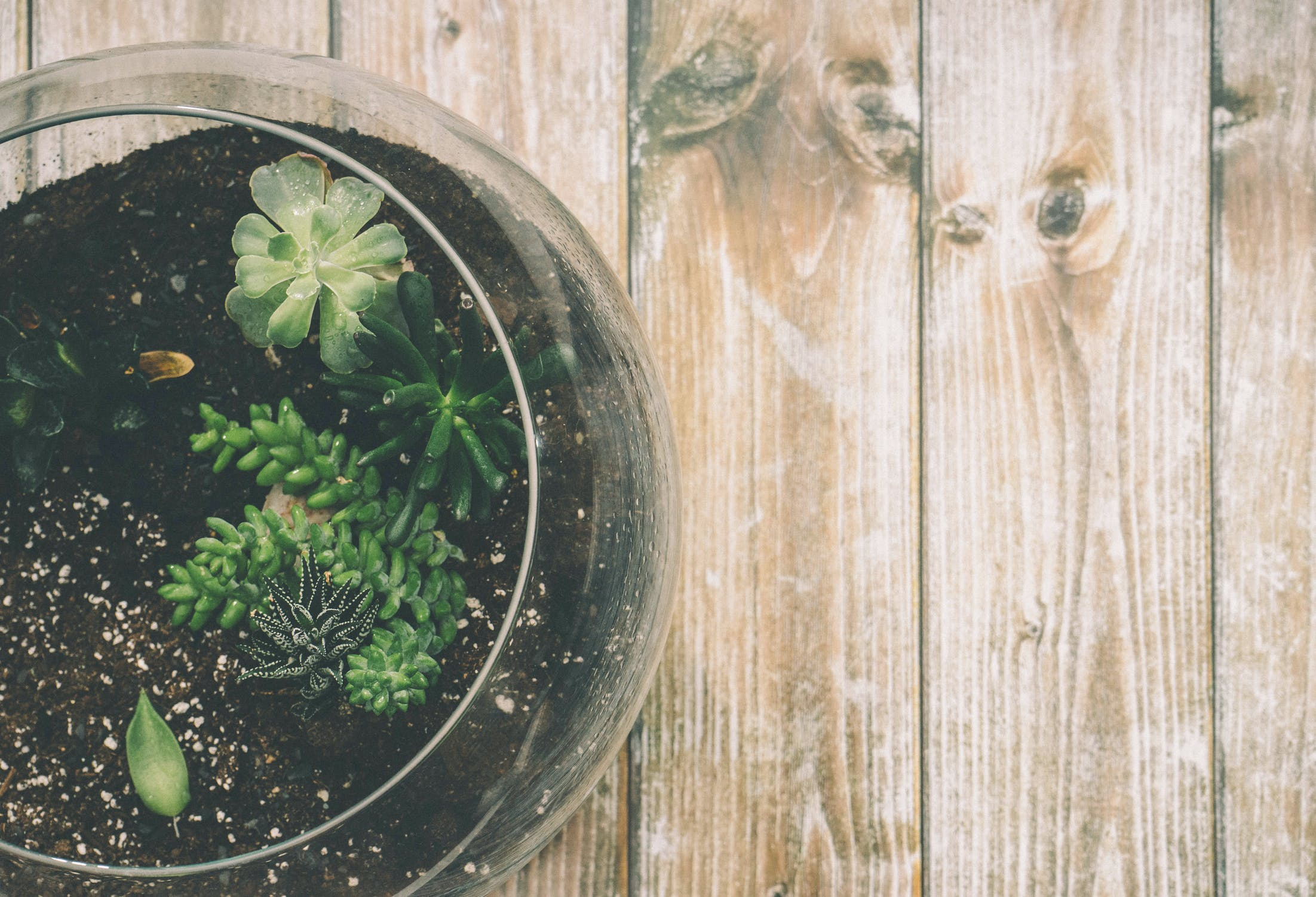 Time to get green-fingered?