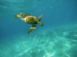 Our oceans are at risk